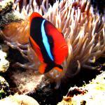 Unter Wasser 1
