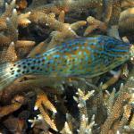 Unter Wasser 3