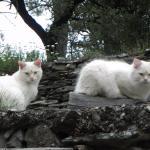 Les 2 chats de la maison, Polisson et Mignon, trop beaux
