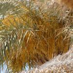 Foto de Laico Djerba Hotel