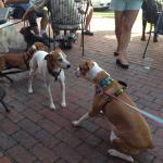 My dog made some friends on the patio of Pensacola Bay Brewery during Barktoberfest