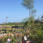 Nursery on a sunny day in May