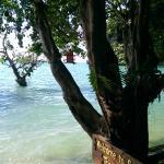Sunrise Tropical Resort Photo