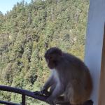 A monkey invades our balcony