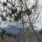 This is a poorly taken photo, but shows your view of Pikes Peak from the Blue Lilac room