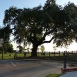 Large Tree at Bluff Park