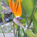 Photo de Orto Botanico