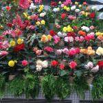 Foto de Hiroshima Botanical Park