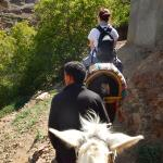 Travelling by mule