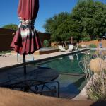 Large pool with extensive decking surrounded by bird feeders and nice landscaping
