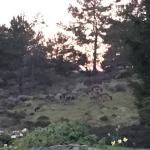 Photo de Pinetree Lodge