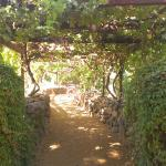 walkway down to oak creek
