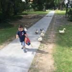 Our son walking around with the ducks