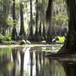 Caddo Lake Tour Co.