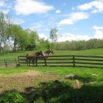 The Columbia County countryside is beautiful, and there are horse farms in the area.