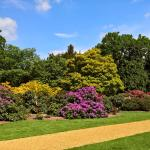 Rhododendron time at Langley Park