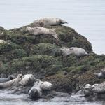 seals warming up
