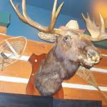 The moose-theme prevails at Moose Winooski's in Barrie, Ontario.