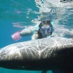 Snorkeling with El Gato