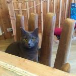 Resident cat, Blu