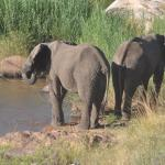One can view the elephants that come down to drink in the early evening from the viewing deck