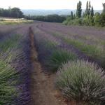 Photo of Le Domaine Saint Jean