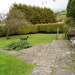 The garden - plenty of space for the dogs to play