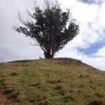 Árbol muy llamativo antes de llegar a la cima