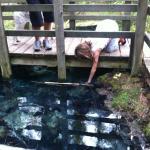 Sulphur Springs Conservation Area