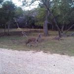 Deer in front of cabin