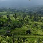 Jatiluwah rice terraces