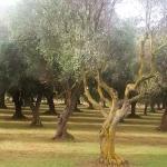 Foto di Villa Barbarina