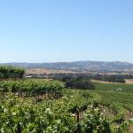 Lovely Paso Robles wine country