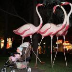 Photo de Flamingo Grand