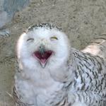 Фотография Antwerp Zoo (Dierentuin)
