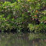 les mangroves que nous a fait visiter l'hôte avec son bateau
