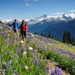 Hiking in Whistler's alpine