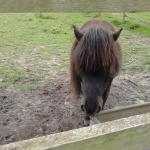 Pony comes to say Hello.