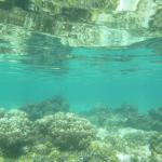 Lagoon snorkeling on island