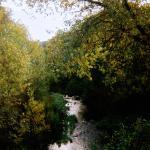 Carmel River at the bridge