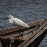 At the fishing village