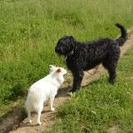 Family dog Priscilla and her buddy roaming the farm