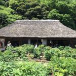 Mobara Peony Garden