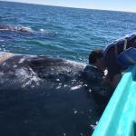 whale kiss