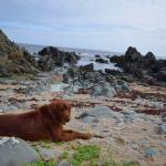 Finn on the beach
