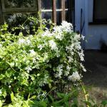 Riverfield in bloom