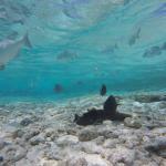 Acuario con bellos peces