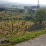 Photo of Agriturismo Vecchio Olivo
