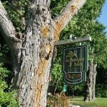 Welcoming Maple Tree