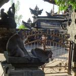 PinkCoco Bali Image